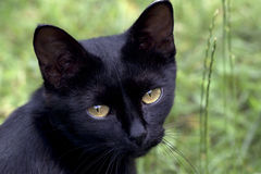 Black cat. In Scotland say: «Black cat on a porch prosperity in the house Royalty Free Stock Photography