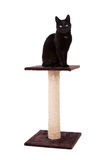 Black cat with a scratch pole Royalty Free Stock Photo
