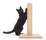 Black cat with a scratching post Royalty Free Stock Photos