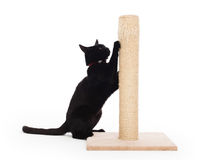 Black cat with a scratching post. Isolated on white royalty free stock photos