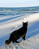 Black cat at the sea. Stock Image