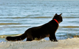 Black cat at the sea. Stock Images