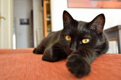 Black cat. Sharing life with a black cat stock image