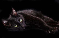 Black cat showing claws on black background Royalty Free Stock Image