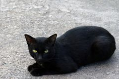 Black Cat sickly ugly on floor royalty free stock image