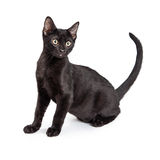 Black Cat Side View Stock Images