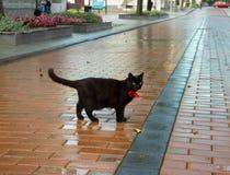Black cat on sidewalk. Royalty Free Stock Photos