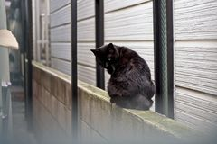 Black cat siting on the stone wall, old brick wall. Copy space royalty free stock image