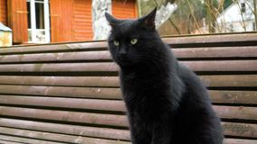 Black cat sits on the bench. Black cat sitting on the bench and absently looks around shaking his head stock footage
