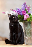 The black cat sits near a vase with the flowers. Royalty Free Stock Photo