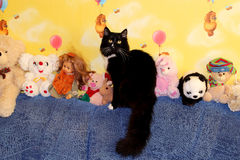 Black cat sits in the nursery Stock Photos