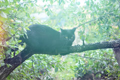 Black cat sits on a tree Stock Image