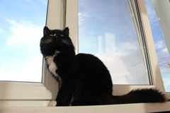 Black cat sits on the window-sill Stock Photography