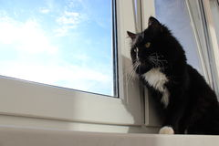 Black cat sits on the window-sill Stock Photo