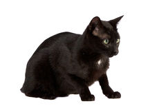 Black Cat Sitting Royalty Free Stock Photography