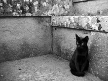 Black cat sitting. In front of stone wall Stock Photos