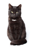 Black cat sitting. On white background stock photography