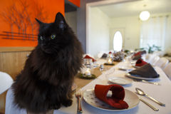 Black Cat Sitting on Banquet Table Stock Images