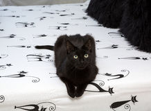 Black cat sitting on a bed Stock Photo