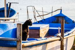 Black cat sitting in a boat pulled up on shore on a sunny October morning at Ahtopol, Bulgaria. Black cat sitting in a blue-white painted boat pulled up on shore Royalty Free Stock Images