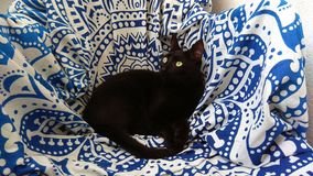 black cat sitting on blue and white pattern on chair stock photo