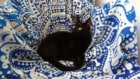 Black cat sitting on blue and white pattern on chair. Black cat sitting on a chair covered with a lovely blue and white mandala-like pattern blanket stock photo