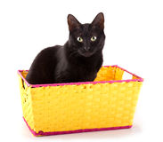 Black cat sitting in a bright yellow basket Royalty Free Stock Photos