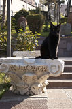 Black Cat. The black cat is sitting on the capital of ancient column alone in the park at sunny day Royalty Free Stock Photo