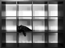 Black cat. Sitting on empty shelves in black and white Stock Images