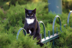 Black cat sitting on a fence in the garden Royalty Free Stock Photography