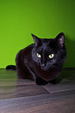 Black cat sitting on the floor Royalty Free Stock Images