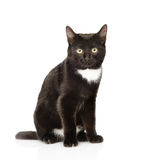 Black cat sitting in front and looking at camera. isolated Stock Photography