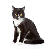 Black cat sitting in front and looking at camera. isolated Stock Images
