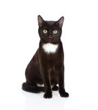 Black cat sitting in front and looking at camera.  on wh Stock Photos