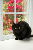 Black cat sitting in front of a white window Stock Photos