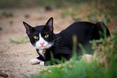 Black cat sitting on the  grass Stock Images