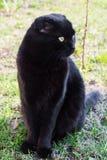 Black cat sitting on grass close-up Stock Photos