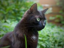 Black cat. Sitting in the grass in the summer royalty free stock photography