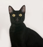 Black cat sitting on gray. Background Royalty Free Stock Photo