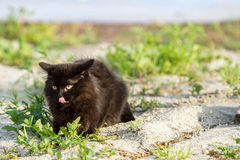 Black cat sitting on gray sand Stock Images