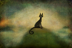 Black Cat Sitting on the Hill Stock Photography