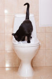 Black cat sitting on human toilet Stock Images
