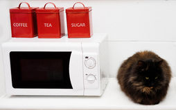 Black cat sitting on a kitchen counter. Big fluffy black cat sitting on a kitchen counter alongside a microwave oven and colourful red containers for tea, coffee Stock Photos