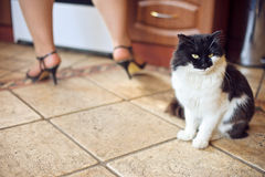 A black cat sitting on kitchen floor. Cat in the house - a black cat sitting on kitchen floor Stock Image
