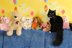 Black cat sitting next to toys Stock Photography