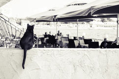 Black cat sitting. One black cat sitting on the wall Stock Photo