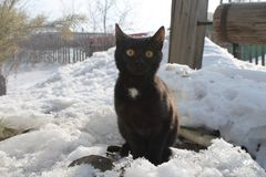 Black cat sitting outside in the snow stock photo