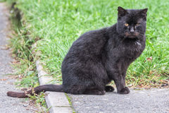 Black cat sitting on a pavement Stock Images