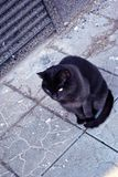Black cat sitting on road, gray tile, top view. Black cat sitting on road and looking forward, gray tile, top view stock photography