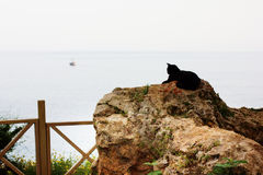 Black cat sitting on a stone looking at sea Stock Image
